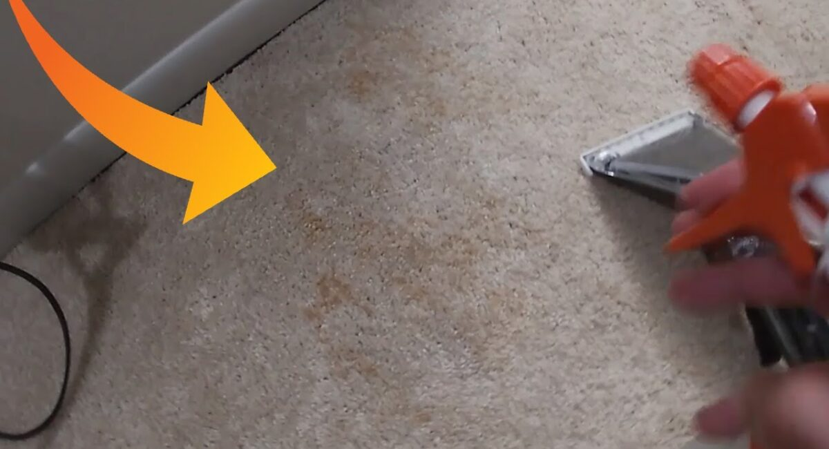 best carpet cleaner for pet owners